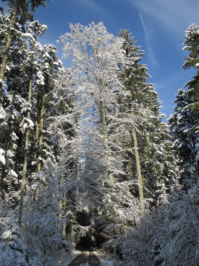 Schnee 4